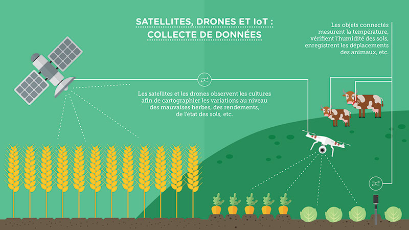 Smart farming: Satellites, dorne et IoT